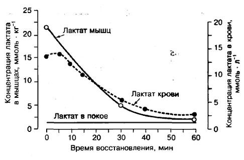 Lactic-acid3