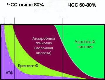 tipy-energii-vo-vremya-intervalnogo-kardio
