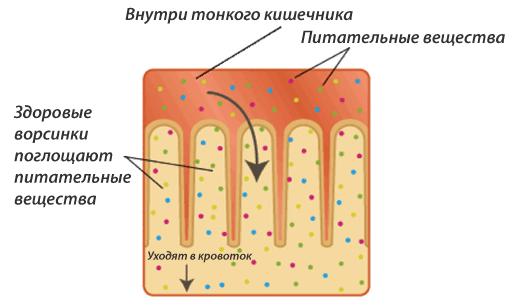 kishechnik-1