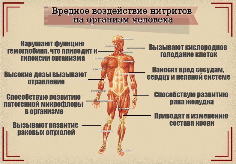 nitrity-i-ih-vozdeystvie-na-organizm