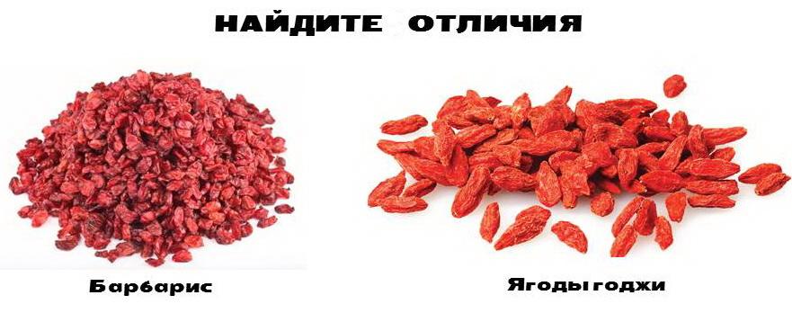 Рис.1 Ягоды барбариса и годжи